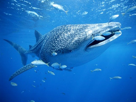 No Fishing For Whales On Sunday-Dumbest Laws In Ohio