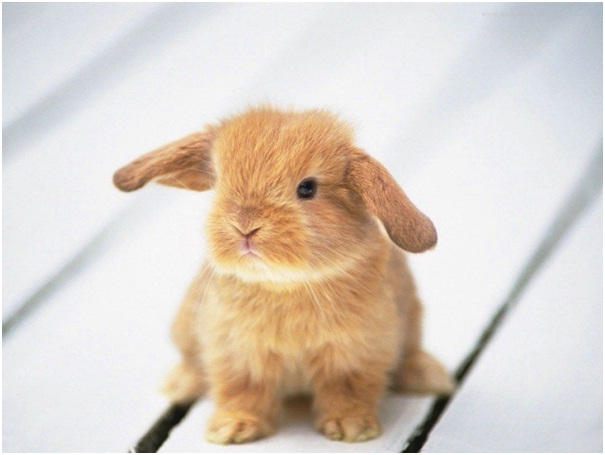 Baby Rabbit-Cutest Animals Ever