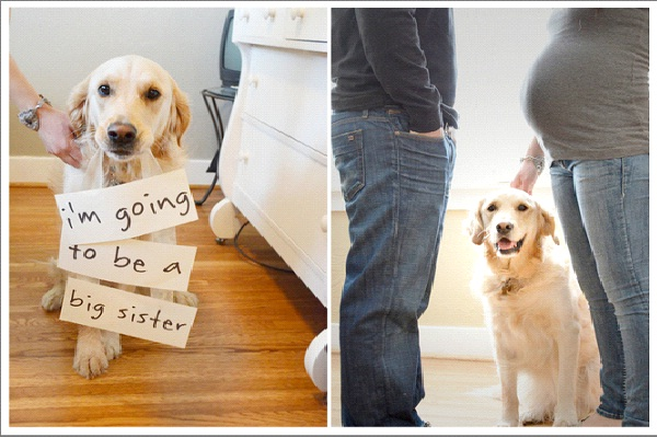 The Dog Knows-Creative Pregnancy Announcement Ideas