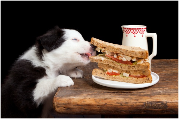 Leave It-Essential Dog Training Tips