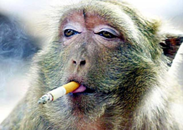 Animals smoking-Bizarre Facebook Groups And Pages