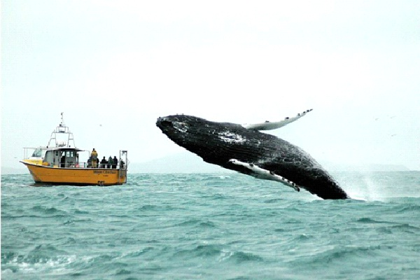 Whale Of A Time-Unluckiest Moments Caught On Camera