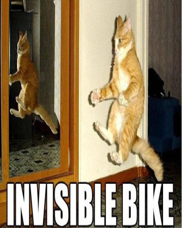 Invisible Bike-Funniest Cat Memes Of All Time