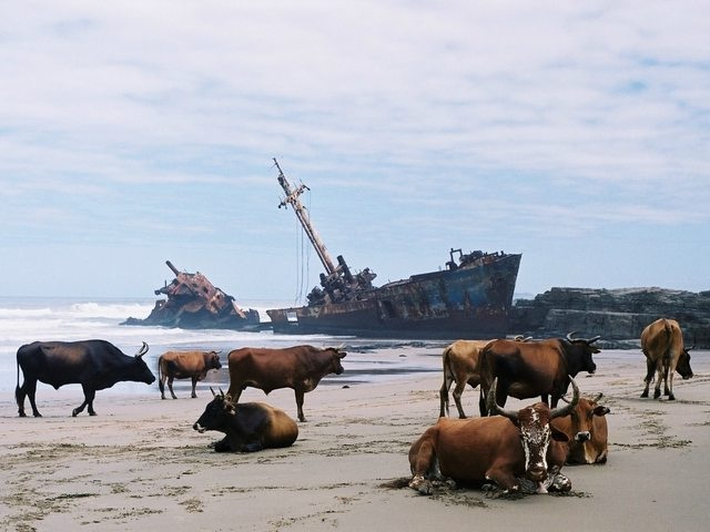 Lots of shipwrecks-Cool Unknown Facts About South Africa