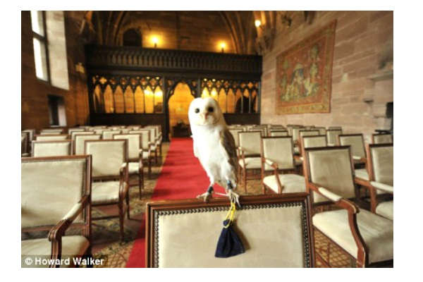 Ring Bearing Owl Flies Away With Rings-Crazy Reasons Why Weddings Were Postponed