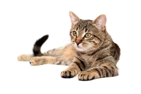 Cats-Weird Facts About Animals