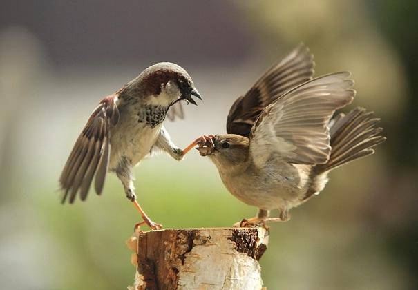 Hard Nosed Mafia Birds-Amazing Perfectly Timed Photos Of Animals