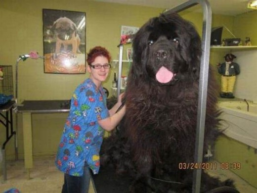 This dog is that big-Photos You Won't Believe Are Not Photoshopped