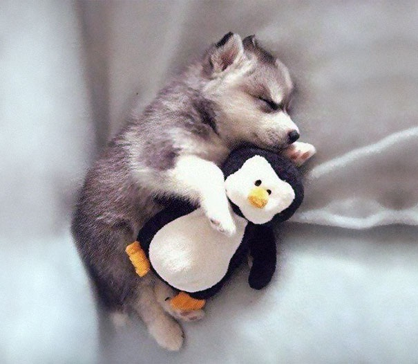 Pup and a penguin-Baby Animals With Stuffed Toys