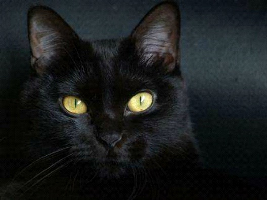 Black Cats-Most Common Superstitions And Their Origins