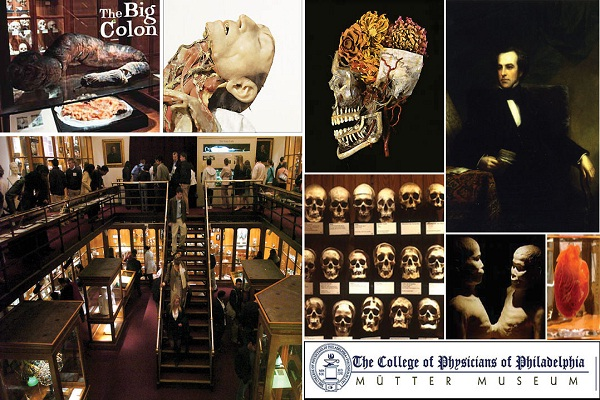 The Mutter Museum-World's Most Frightening Museums