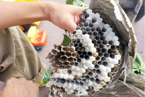 bee hive 12 amazing pictures of things cut in half