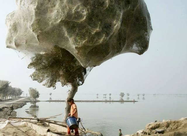 This Cobweb Tree-15 Images That Look Fake, But Are Actually True