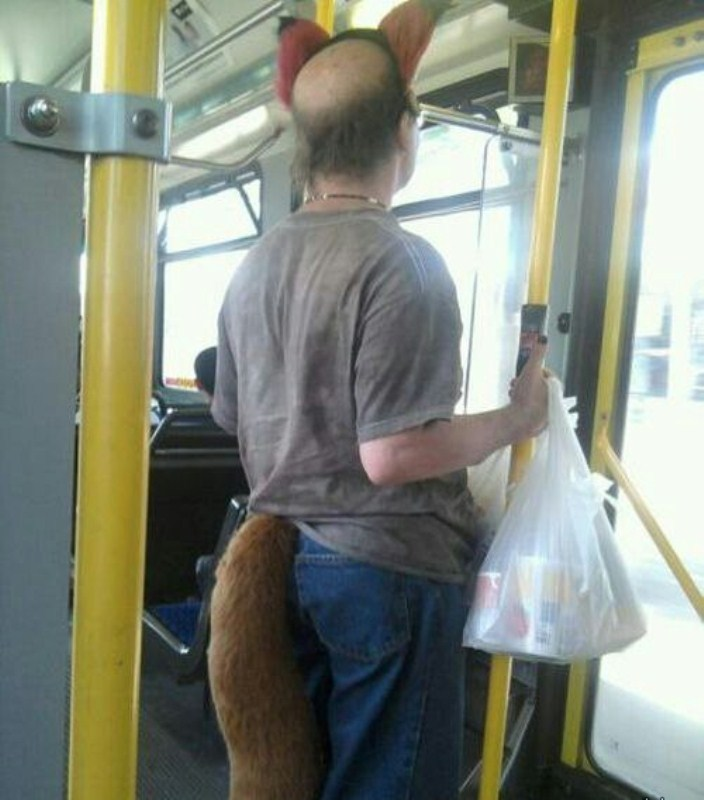 Fox Spotted in a Metro Train-15 Most Awkward Public Transport Pictures