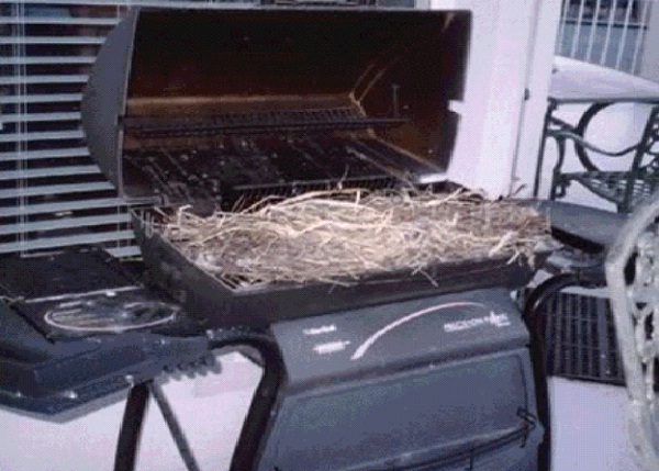 In A Barbecue Grill-Most Unusual Places For A Bird's Nest
