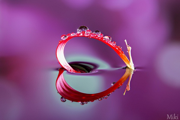 My Heart-Amazing Water Droplet Photography By Miki Asai