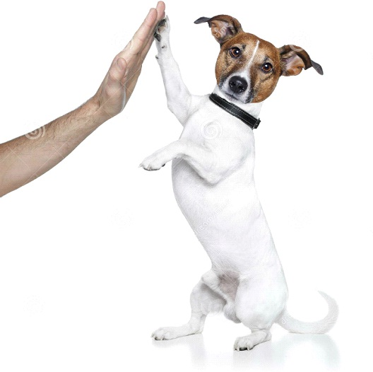 High Five-Cool Things You Can Teach Your Dog Easily