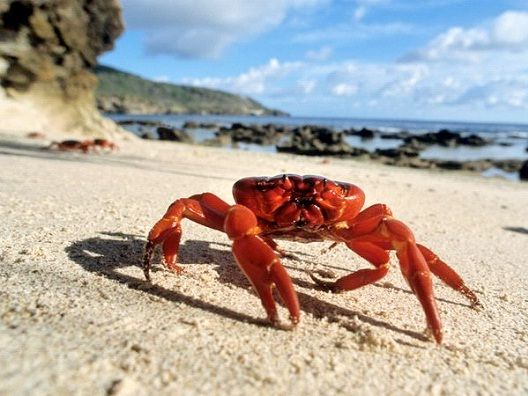 Catching Crabs-Dumbest Laws In Florida