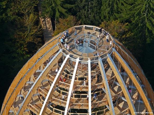Baumwipfelpfad-Most Amazing Observation Towers