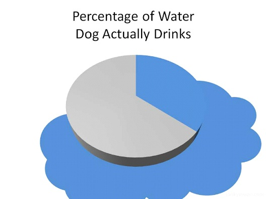 Percentage Of Water Dogs Actually Drink-Hilarious Relatable Graphs
