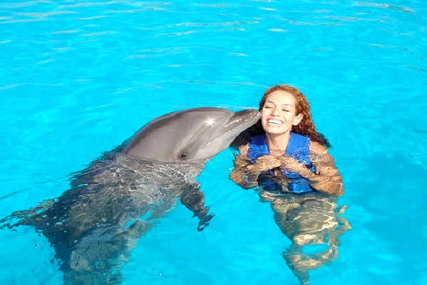 Swim With Dolphins-Best Bucket List Ideas