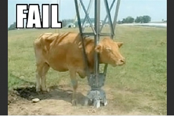 Can't Get Out-Funny Animal Fails