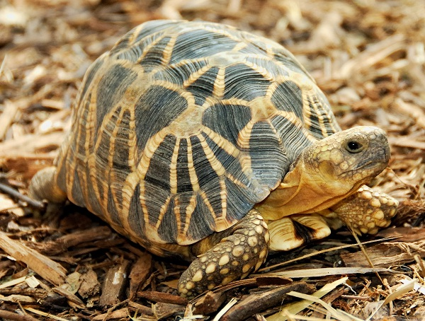 300 tortoises-Most Amazing Things Ever Found In Abandoned Luggage