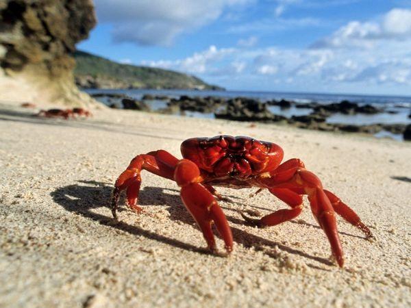 Crab-Most Consumed Sea Foods