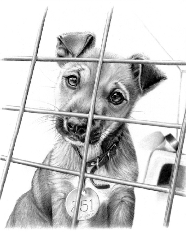 Caged Pup-Mind Blowing Pencil Art