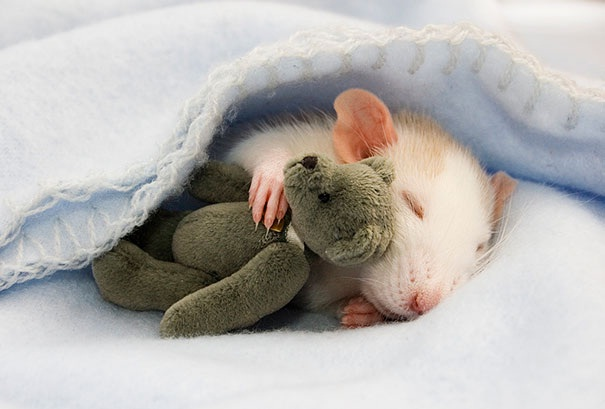 A rodent with a bear-Baby Animals With Stuffed Toys