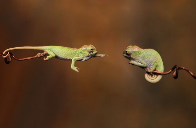 Caught In A Fight-Amazing Perfectly Timed Photos Of Animals
