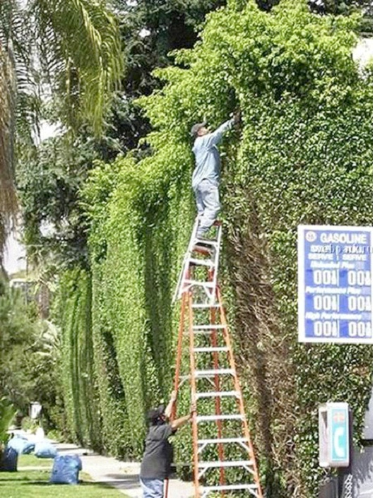 Double Ladder-Photos Of Men Being Literally Too Stupid
