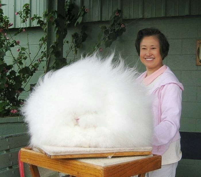 Free the Floof!!!-15 Images That Look Fake, But Are Actually True