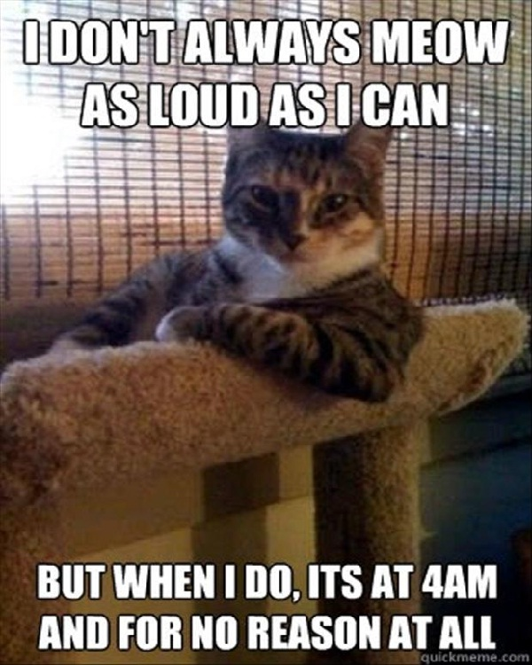 4am call-Funniest Cat Memes Of All Time