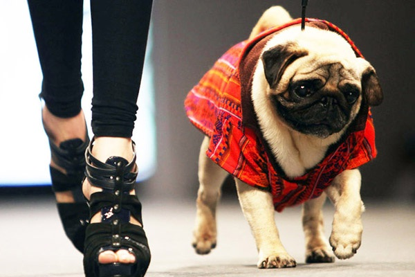 Aw!-Craziest Catwalk Shows