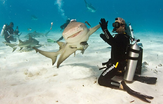 Cool Fish-Amazing Perfectly Timed Photos Of Animals