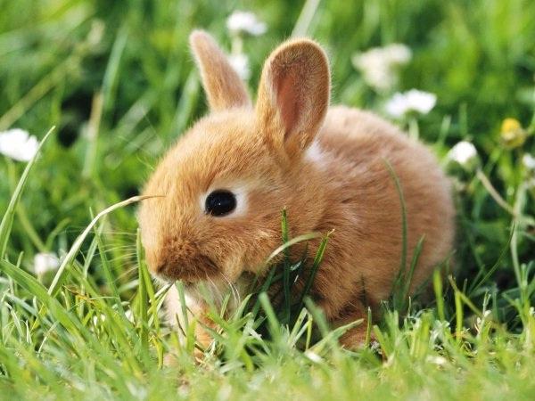 Rabbit-Best Animals For Pets