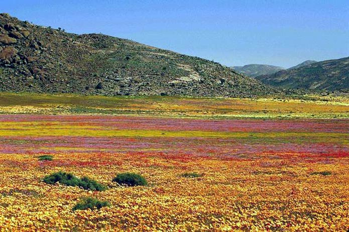 A floral kingdom-Cool Unknown Facts About South Africa