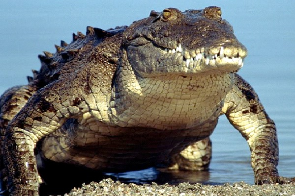 Crocodile Poop-Craziest Birth Control Methods