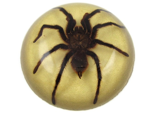 Tarantula Paperweight-Coolest Paperweights