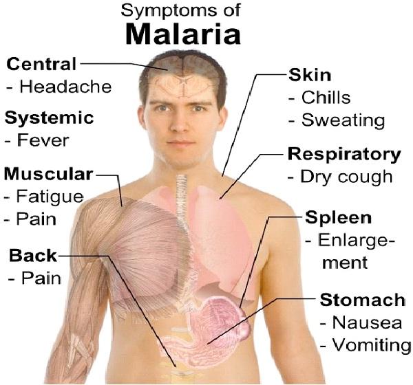 Malaria-Worst Diseases