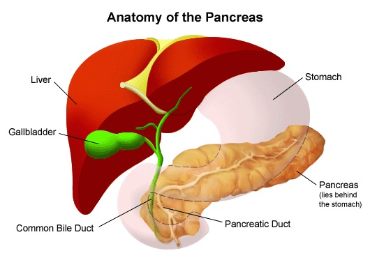 Pancreas transplant-Most Expensive Surgeries In The World