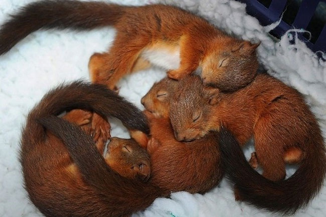 Snuggle Z's-Amazing Pics Of Animals Pillowing Each Other
