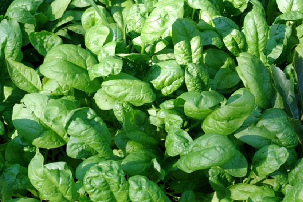 Spinach-Most Favorite Pizza Toppings