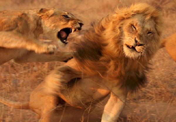Jungle Love-Unluckiest Moments Caught On Camera