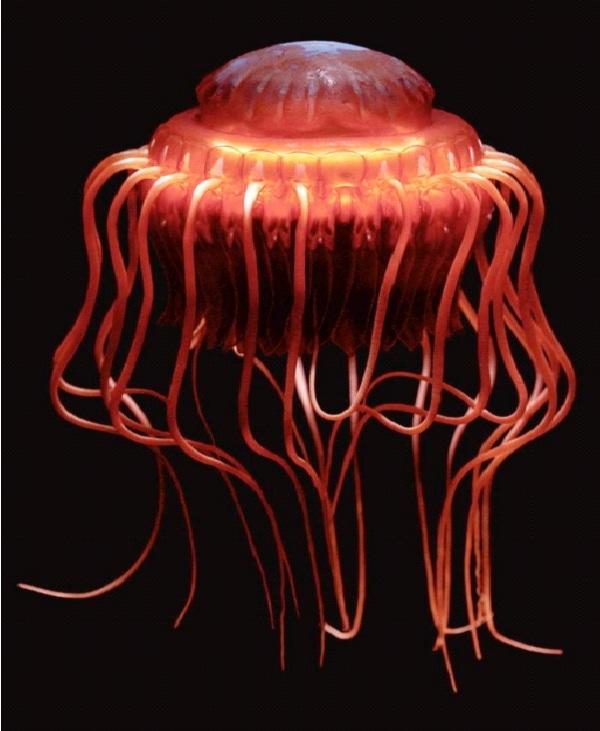 Alarm Jellyfish-Amazing Bioluminescent Organisms