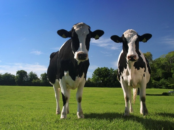 Dairy-Natural Ways To Keep Your Teeth Healthy
