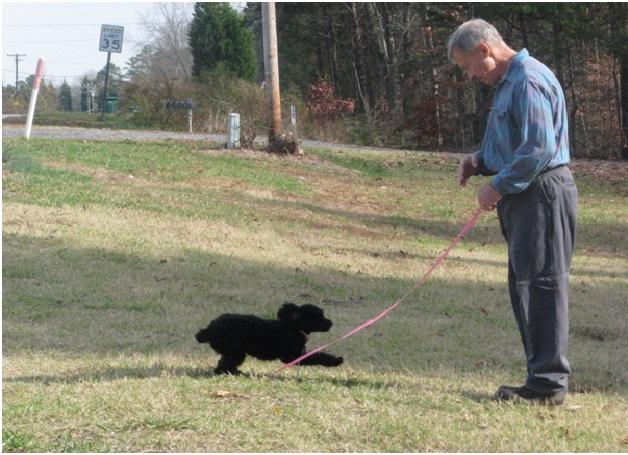 Heel-Essential Dog Training Tips