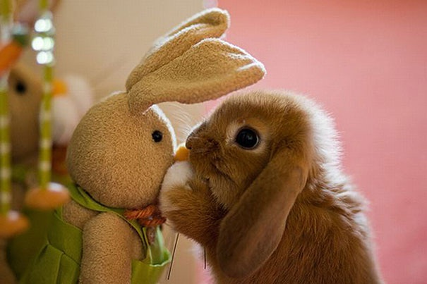 Two rabbits together-Baby Animals With Stuffed Toys