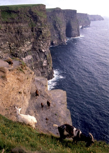What do you mean you are scared of heights?-Photos Of Goats On Cliffs